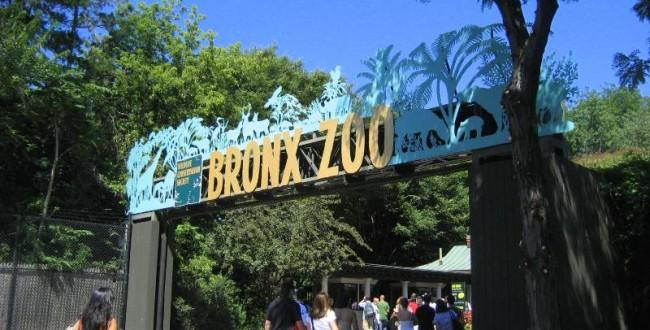 Зоопарк в Бронксе, Нью-Йорк, США