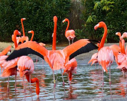 Смитсоновский Национальный зоологический парк, Вашингтон, США