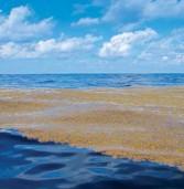 Самое большое в мире море – Саргассово