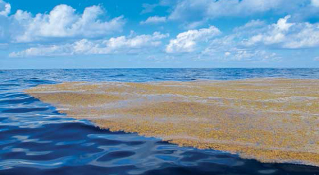 Саргассово-море