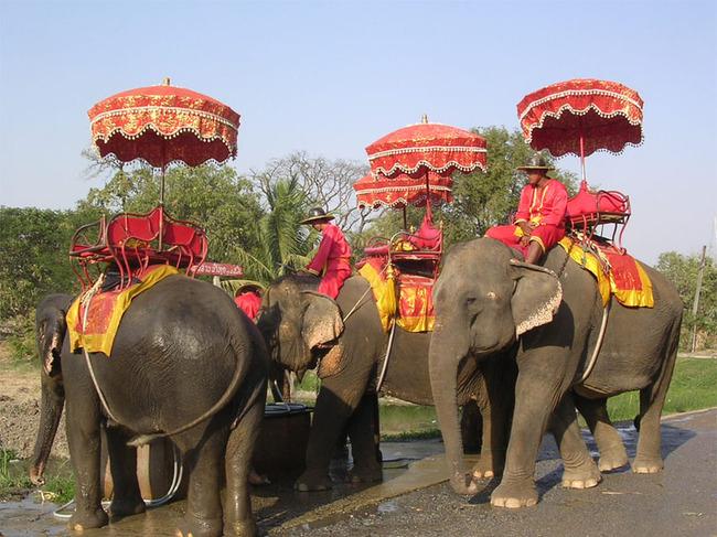 Путешествие на слонах